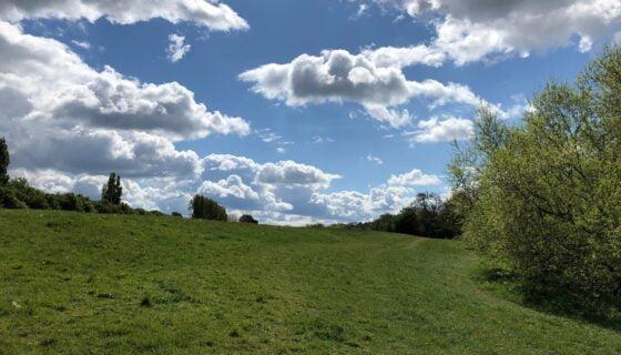 Mandale Meadow